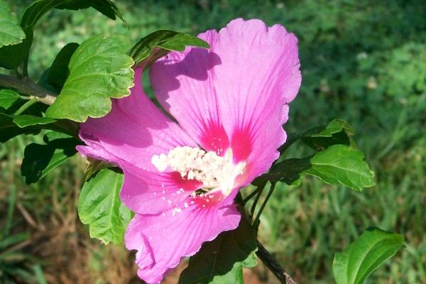 blooming-2010-06-14-4.JPG