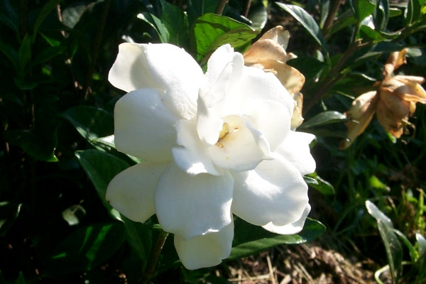 blooming-2010-06-14-5.JPG