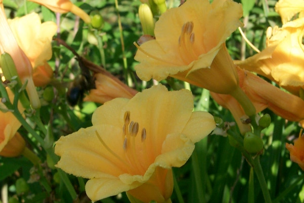 blooming-2010-06-14-7.JPG