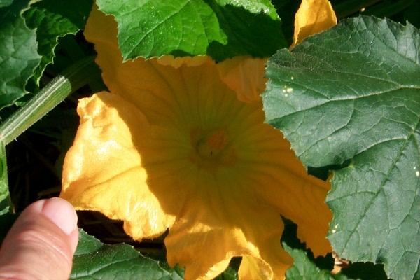 blooming-2010-06-14-8.JPG