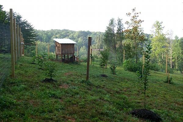 across-garden-2010-07-23.JPG