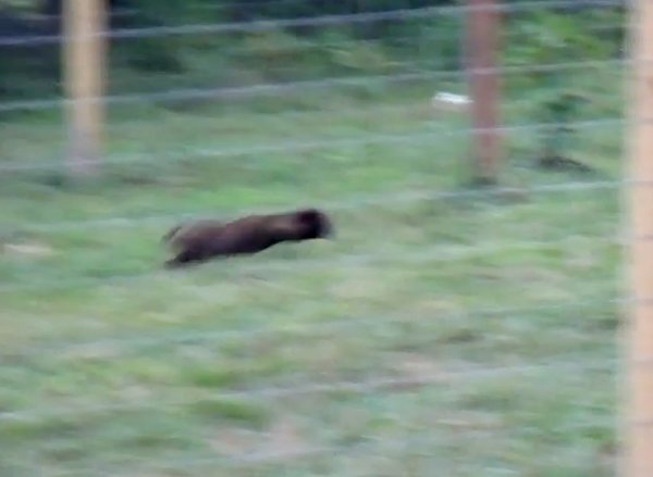 groundhog-chase-2.jpg