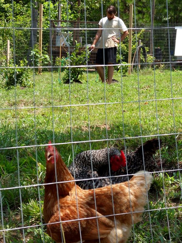 ken-with-hens-12.JPG