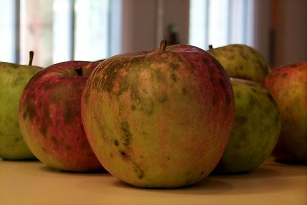 apple-economics-1.JPG