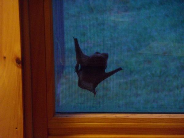 bat-visitor.JPG