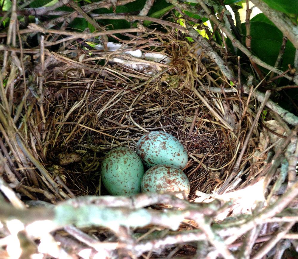 birds-nest-1