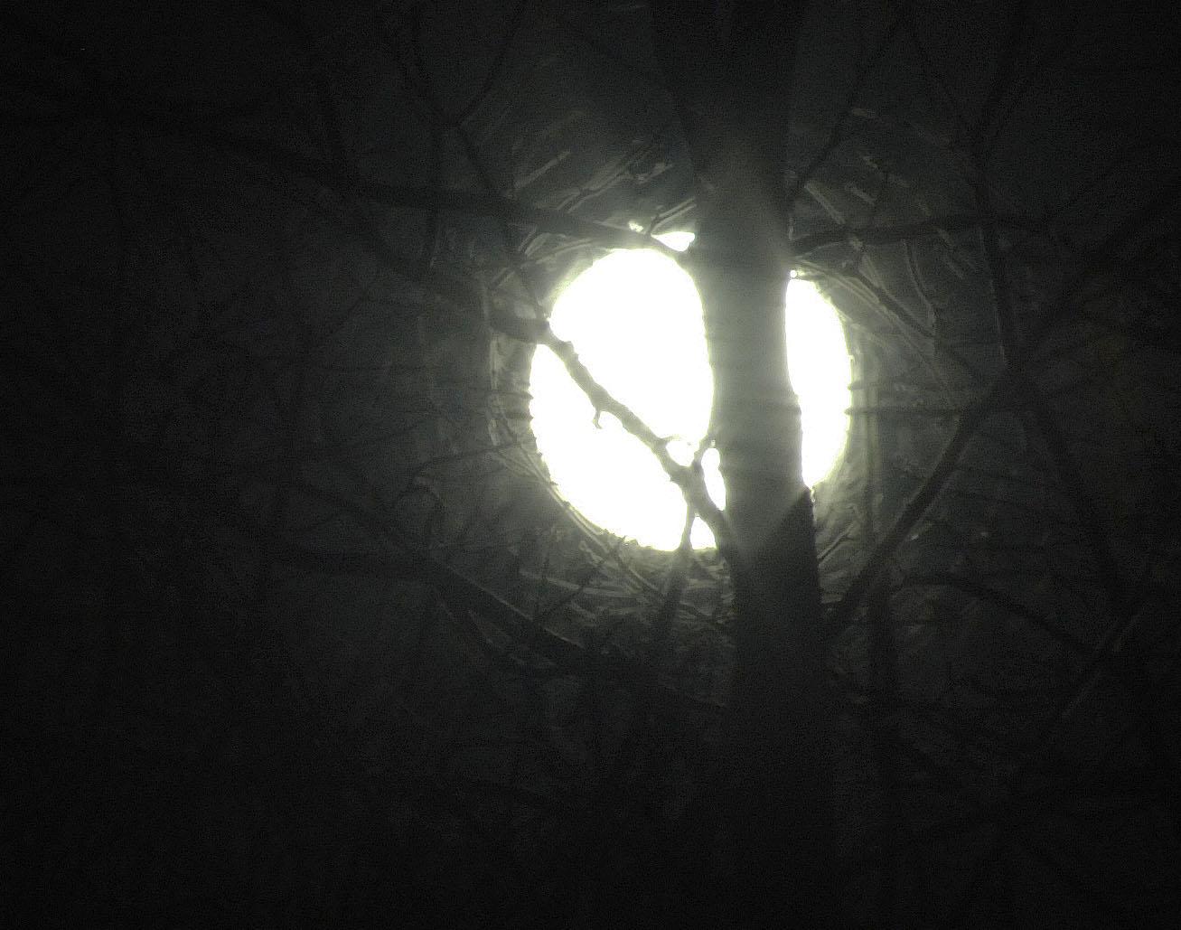 rising-moon-2