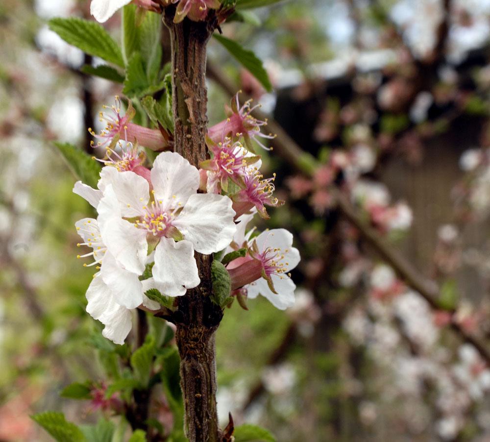 bloom-3