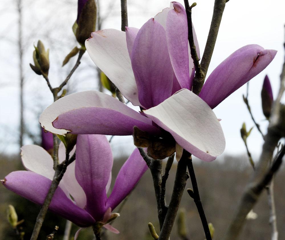 bloom-4