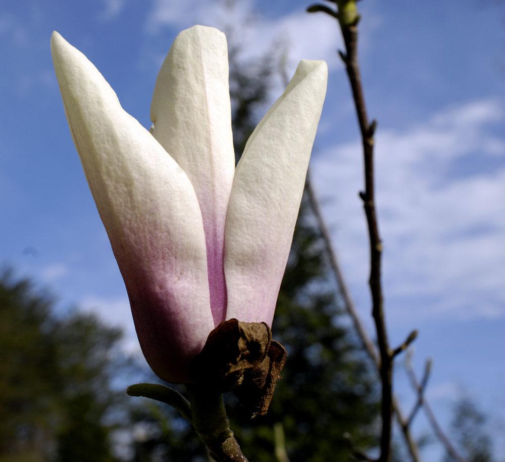bloom-5