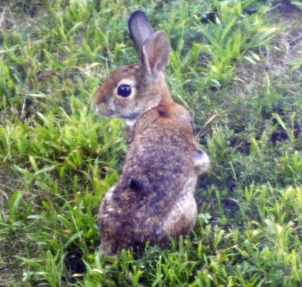 wabbit-2